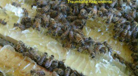 Nische Honig als Chance für Profis