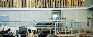 """EU-Milchpolitik: """"Wir sollten die Ställe anfüllen"""""""