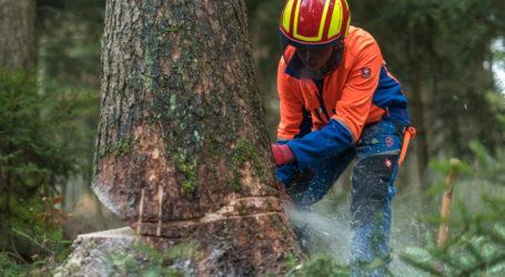 """Wald soll """"Leitmotiv"""" des Waldviertels werden"""