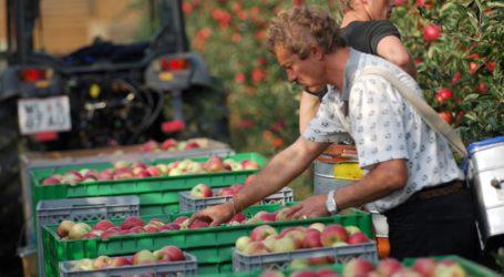 Weiter trauriges Bild bei heimischen Äpfeln
