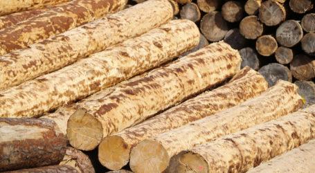 Rege Nachfrage nach Sägerundholz