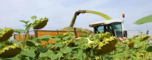 Landwirtschaft konnte Treibhausgas-Ausstoß reduzieren