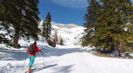 Wintersport mit Rücksicht im Wald