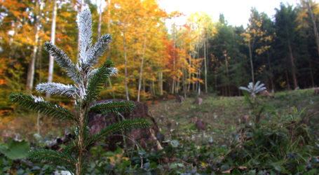 Kärnten leidet unter Wildverbiss