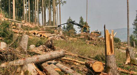 Waldviertel als Modellregion für Forstwertschöpfung