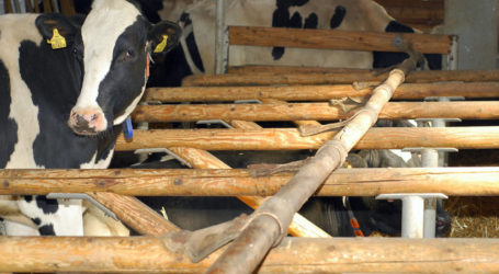 Prognose: Milchanlieferung wird um halbes Prozent steigen