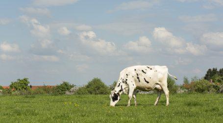 Fonterra rechnet mit stabilem Milchpreis