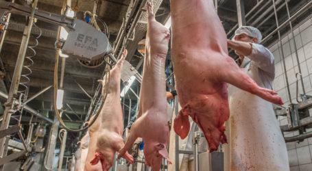 Deutschland produziert immer mehr Fleisch