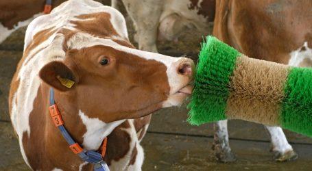Schicksalstage für die Milchwirtschaft