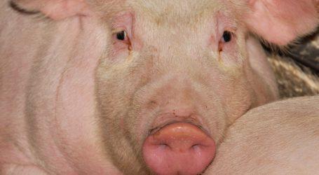 Schweinemarkt entwickelt sich lustlos