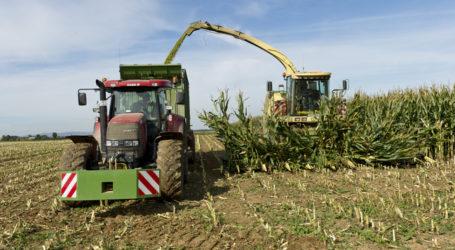 Mais und Soja werden vom Klimawandel profitieren