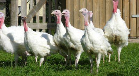 Hilfe für von Vogelgrippe betroffene Betriebe gefordert