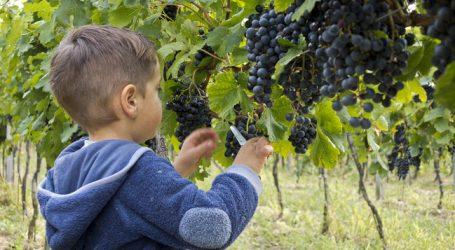 Weinbau für das Burgenland ökonomisch bedeutend