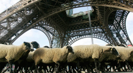 Marine Le Pen: Agrarpolitik besser in Paris als Brüssel aufgehoben