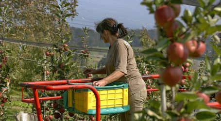 Heimischer Apfellagerbestand extrem niedrig
