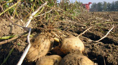 """Greenpeace: """"Bienenkiller"""" in vier von fünf Erdapfelfeldern"""