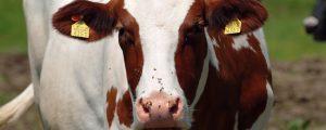 Internationaler Index: Milchrohstoffe 2016 um 47 % besser