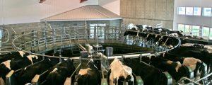 Experten glauben an geringfügige Steigerung der Milchproduktion