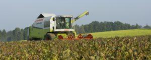 Sojaanbau soll auf 80.000 Hektar steigen