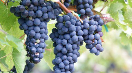 """Forschungsprojekt """"Klimaanpassung in Obst- und Weinbau"""""""