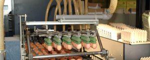 Titschenbacher: Österreichern werden Käfigeier untergejubelt