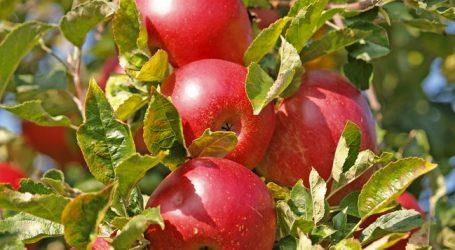 Restbestände an heimischen Äpfeln werden zurückgehalten