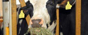 Neuseeländischer Milchpreisindex steigt