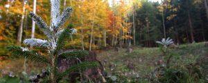 Beratungsangebot zu Wildschäden