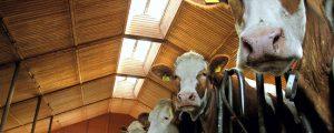 Deutsche Milchwirtschaft: Zahlungsfähigkeit größte Herausforderung