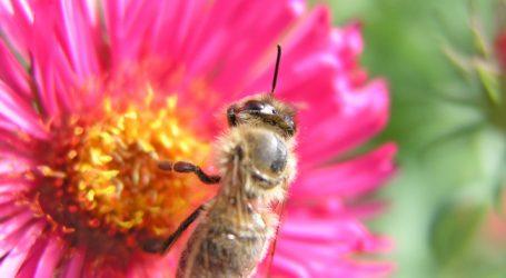Oberösterreich richtet Bienenzentrum ein