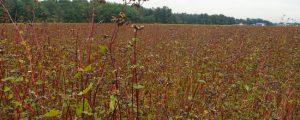 Kompromisse bei Bioverordnung zeichnen sich ab