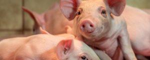 Tierschutz-Plattform soll Praxistauglichkeit prüfen