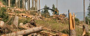 Natura 2000 verunsichert Forstwirte