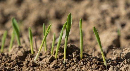 Getreidefläche dürfte heuer zurückgehen
