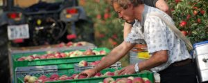 Heimische Äpfel sind Mangelware