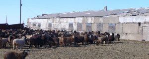 Kasachstan fördert Genossenschaftsgründungen
