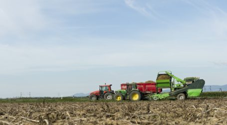 Heimische Frühkartoffel-Ernte beginnt