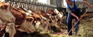 Milchanlieferung zu Jahresbeginn unter Vorjahresniveau