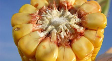 Ukraine soll mehr Weizen und Mais importieren dürfen
