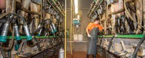 NÖM und Berglandmilch erhöhen Milchpreis