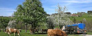 Maifrieden für Freie Milch-Lieferanten