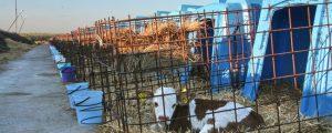 Russland und Weißrussland streiten über Milchimporte