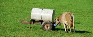 Europäische Milchpreise ziehen kräftig an