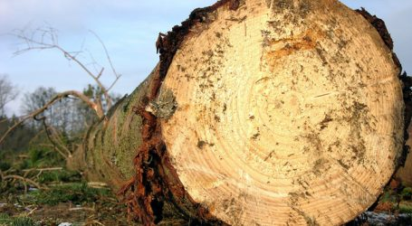 Vorarlberg startet Pflegeoffensive für Wälder