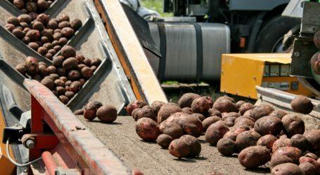 Frühkartoffelernte verzögert sich