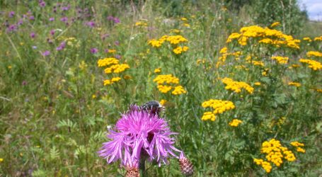 AMA gibt Nutzung von Biodiversitätsflächen frei