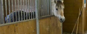 Pferdehalter drängen auf Lösung bei Gewerbeordnung
