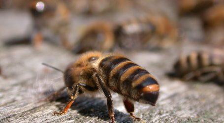 """OÖ arbeitet an """"ganzheitlichem Bienenschutz"""""""