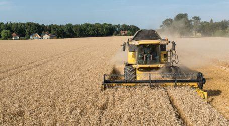 Getreideernteprognose nach unten korrigiert