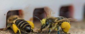 """""""Zentrum für Bienenwirtschaft"""" soll Bienensterben eindämmen"""